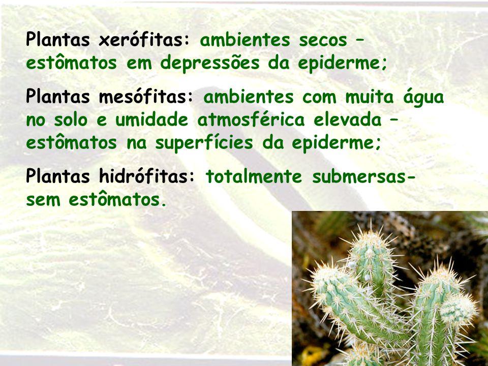 Plantas xerófitas: ambientes secos – estômatos em depressões da epiderme;