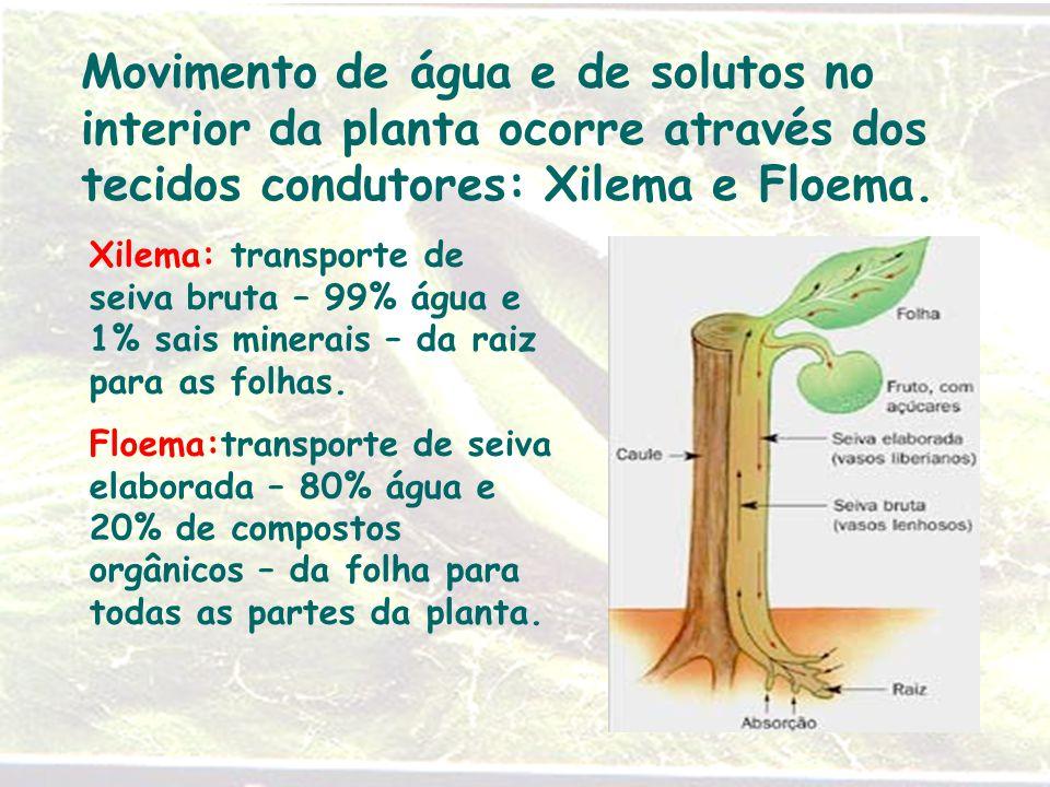 Movimento de água e de solutos no interior da planta ocorre através dos tecidos condutores: Xilema e Floema.