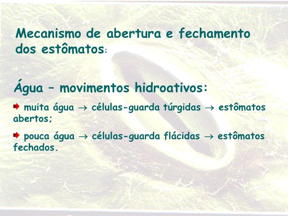 Mecanismo de abertura e fechamento dos estômatos: