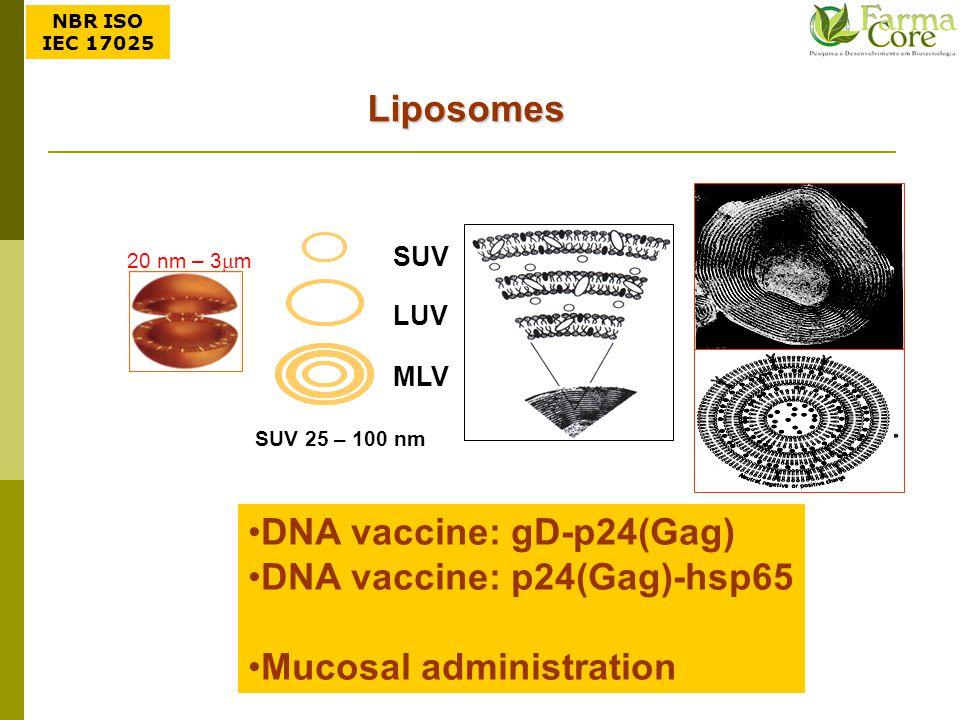 DNA vaccine: gD-p24(Gag) DNA vaccine: p24(Gag)-hsp65