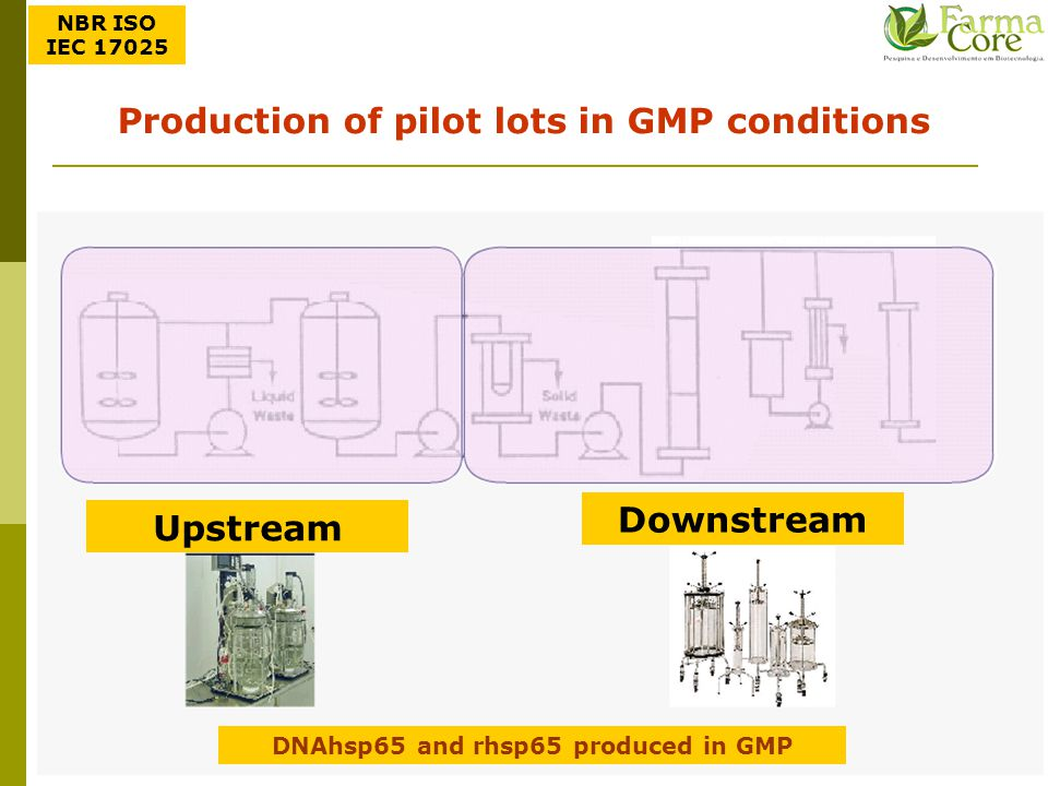 Production of pilot lots in GMP conditions Downstream Upstream
