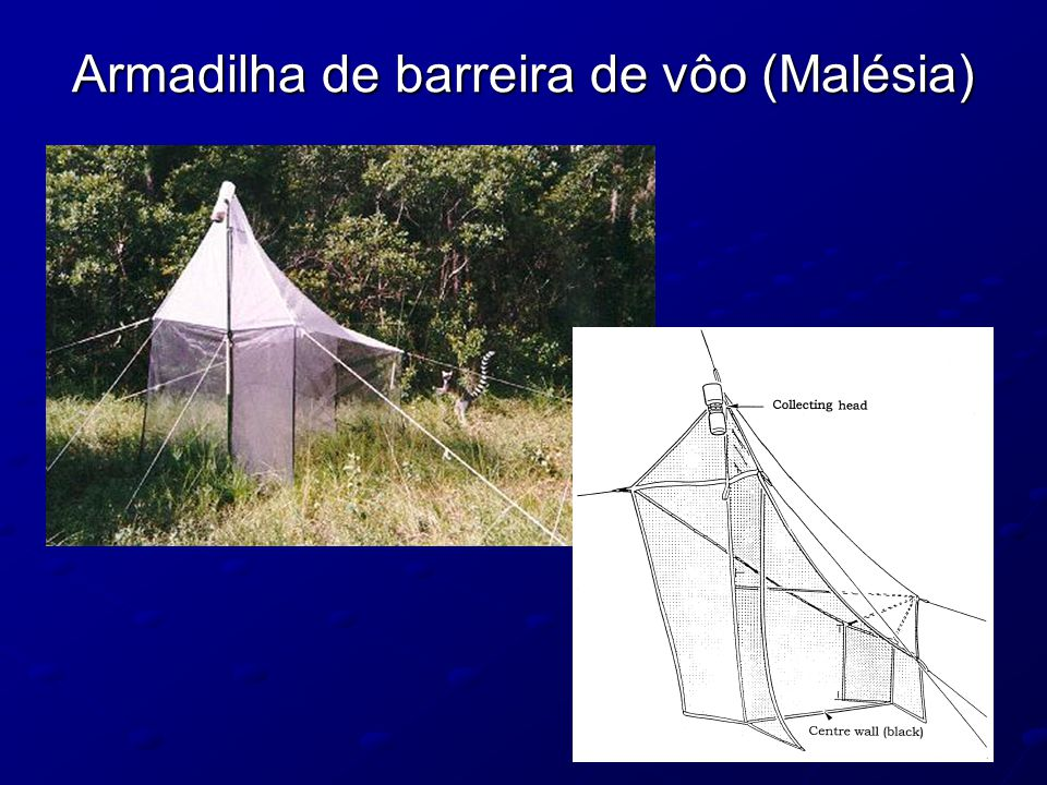 Armadilha de barreira de vôo (Malésia)