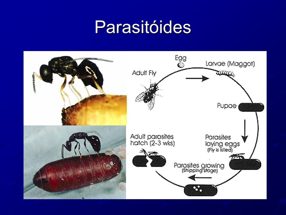 Parasitóides