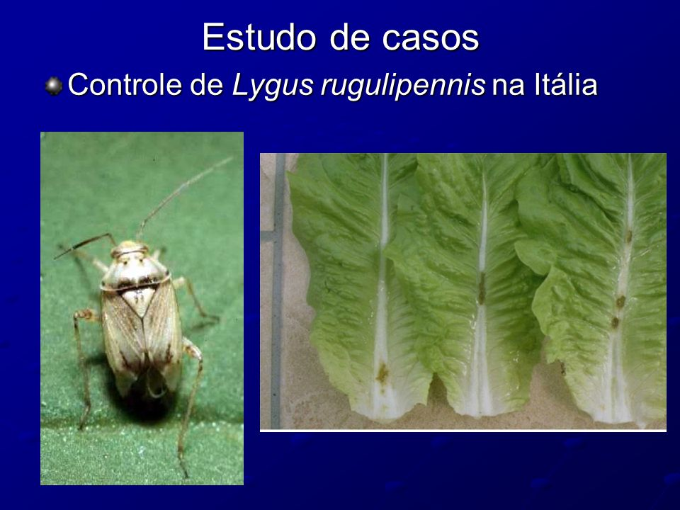 Estudo de casos Controle de Lygus rugulipennis na Itália