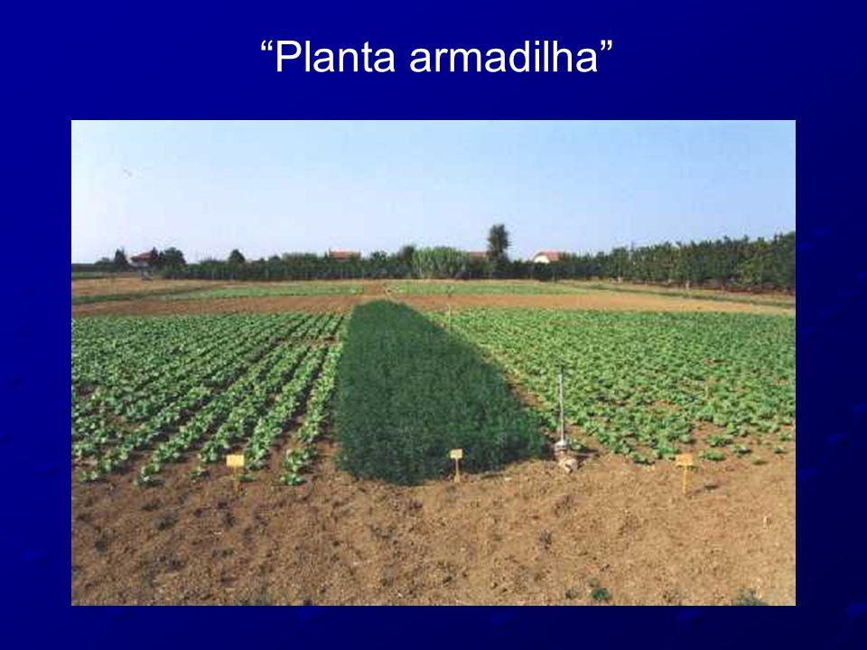 Planta armadilha