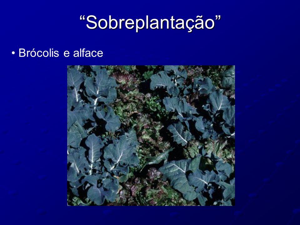 Sobreplantação Brócolis e alface