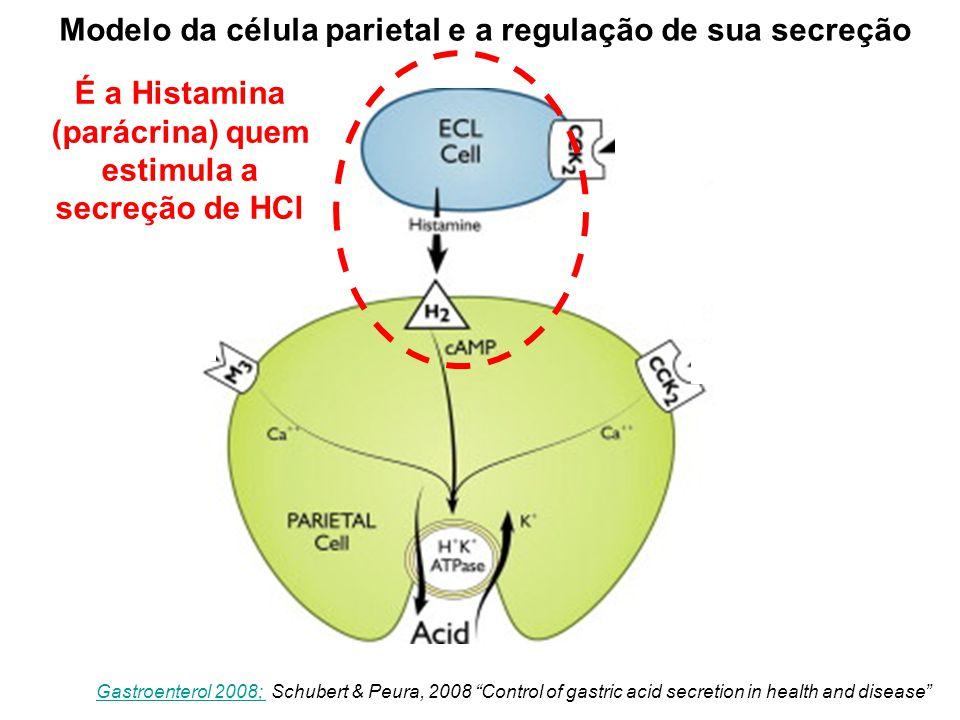 Modelo da célula parietal e a regulação de sua secreção