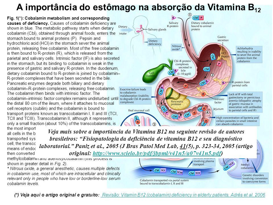A importância do estômago na absorção da Vitamina B12