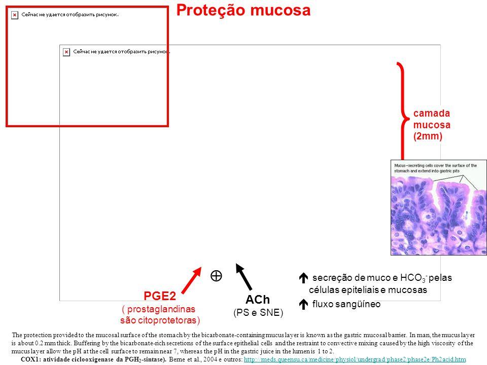 Proteção mucosa   secreção de muco e HCO3- pelas  fluxo sangüíneo