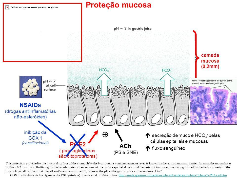 Proteção mucosa  NSAIDs  secreção de muco e HCO3- pelas