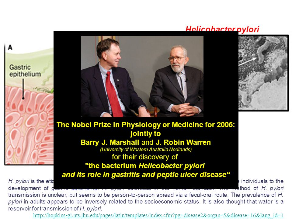 Helicobacter pylori The Nobel Prize in Physiology or Medicine for 2005: jointly to. Barry J. Marshall and J. Robin Warren.