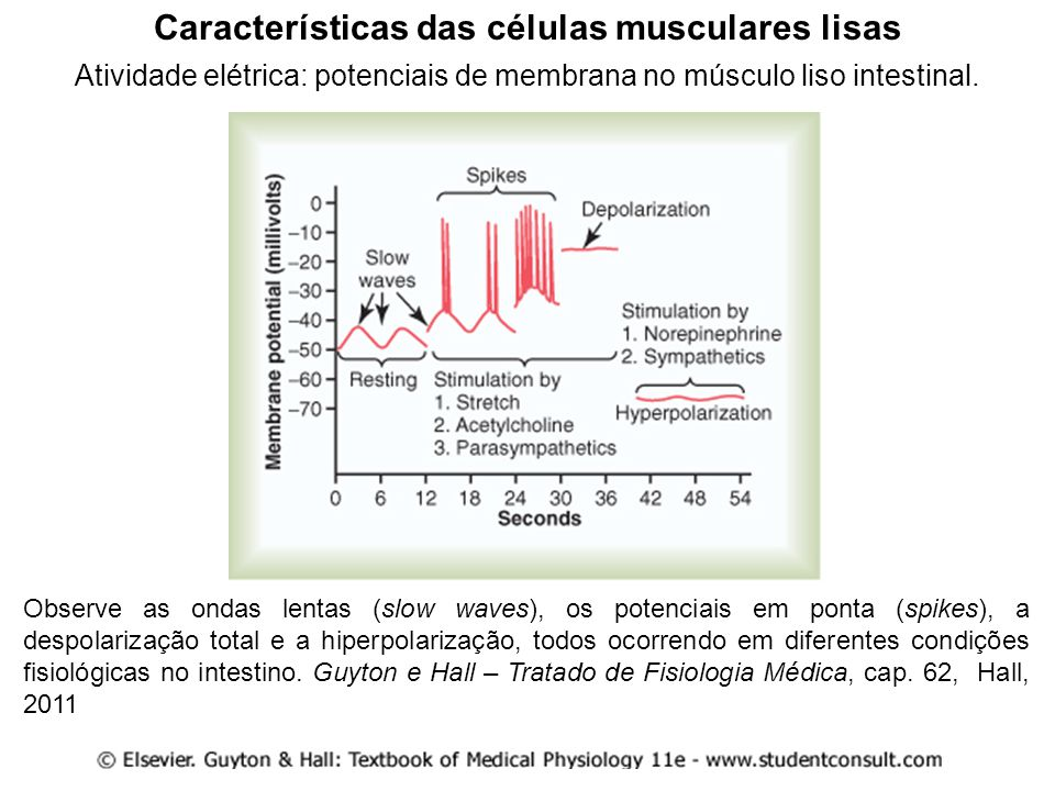 Características das células musculares lisas