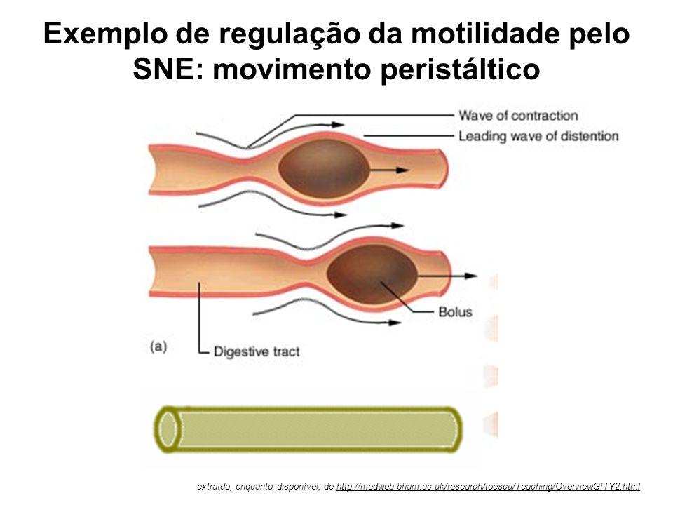 Exemplo de regulação da motilidade pelo SNE: movimento peristáltico