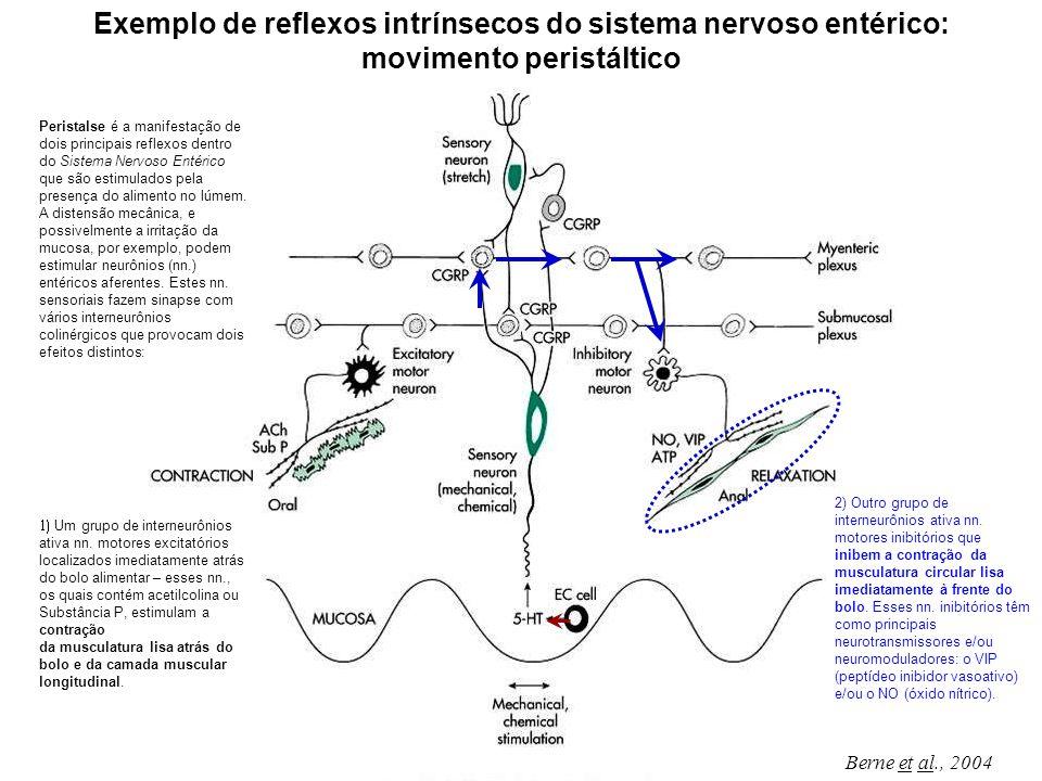 Exemplo de reflexos intrínsecos do sistema nervoso entérico: movimento peristáltico
