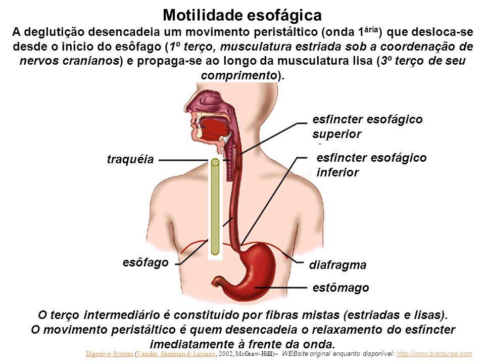 Motilidade esofágica