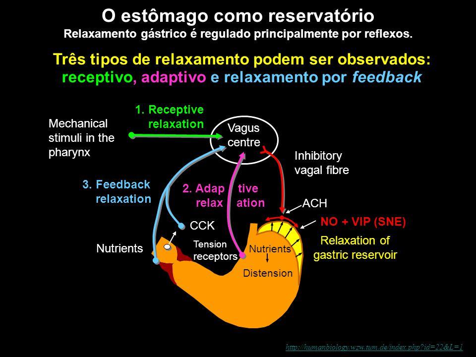 O estômago como reservatório