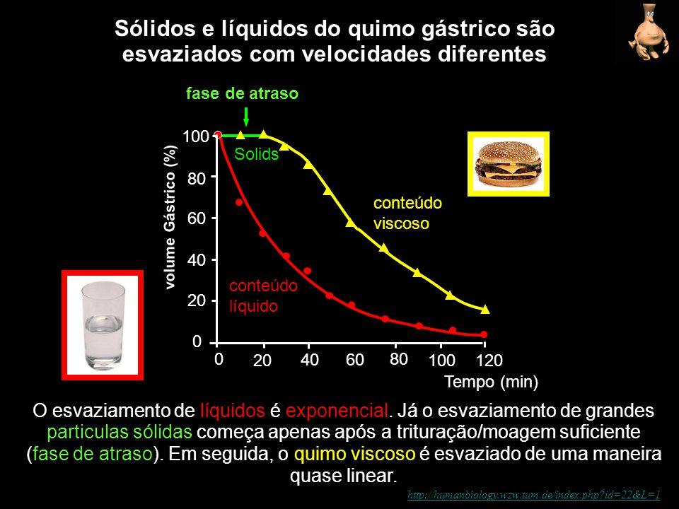 Sólidos e líquidos do quimo gástrico são
