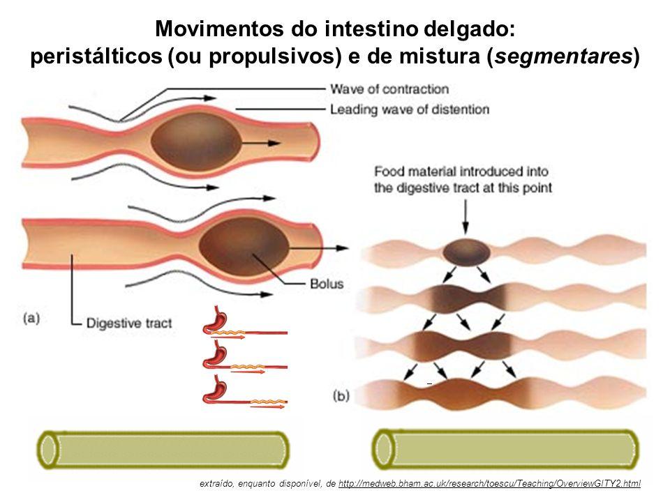 Movimentos do intestino delgado: