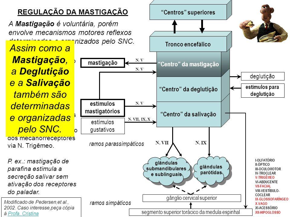 Centros superiores REGULAÇÃO DA MASTIGAÇÃO.