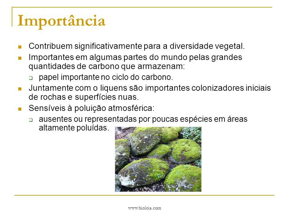 Importância Contribuem significativamente para a diversidade vegetal.