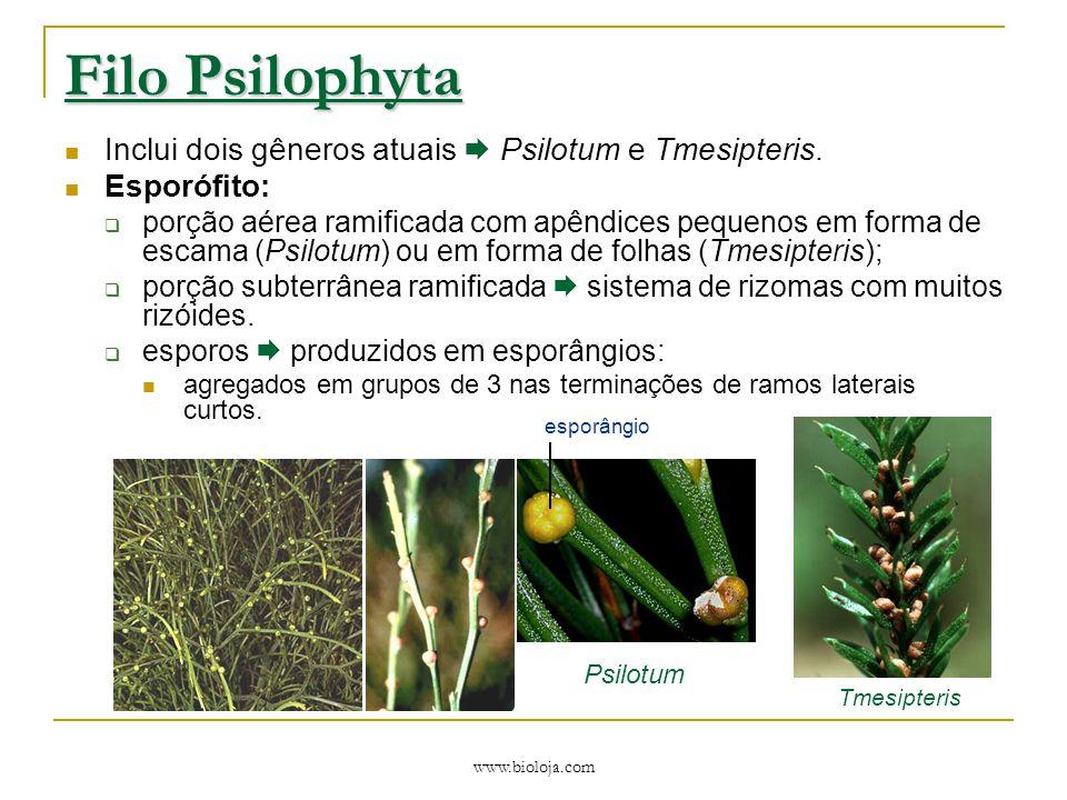Filo Psilophyta Inclui dois gêneros atuais  Psilotum e Tmesipteris.