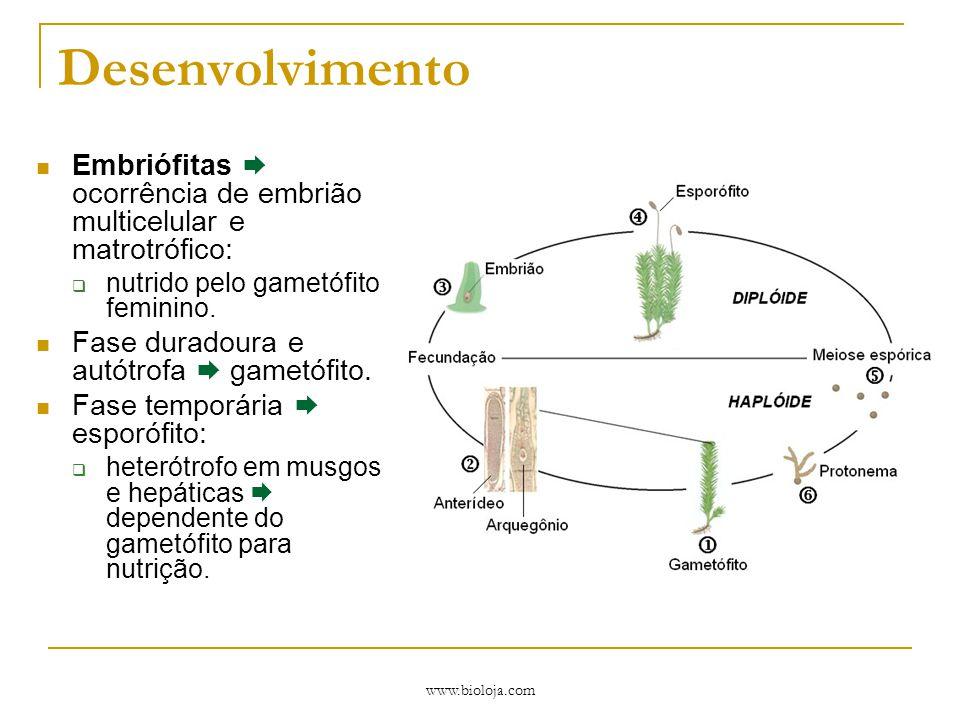 Desenvolvimento Embriófitas  ocorrência de embrião multicelular e matrotrófico: nutrido pelo gametófito feminino.