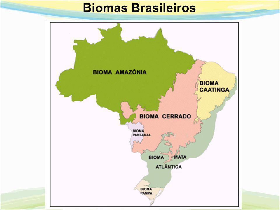 Biomas Brasileiros 18 18 18
