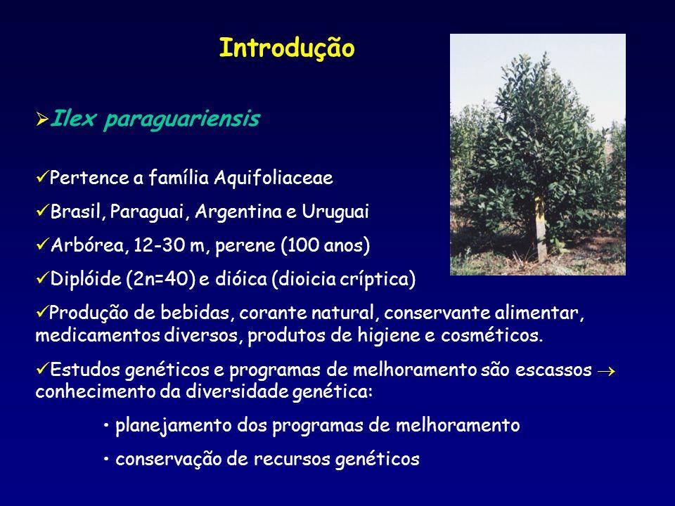 Introdução Ilex paraguariensis Pertence a família Aquifoliaceae