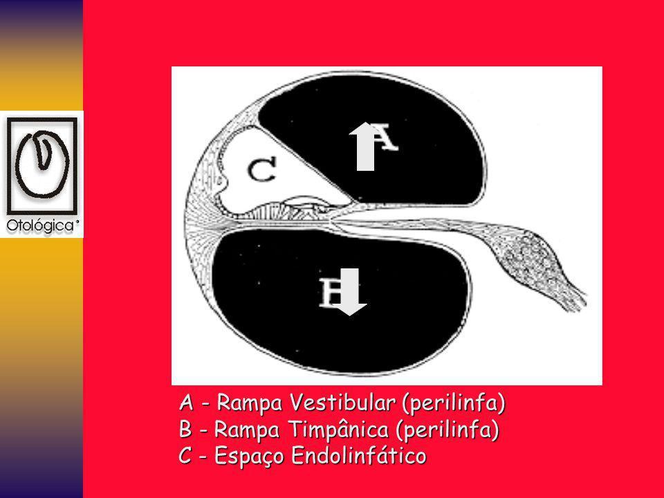 A - Rampa Vestibular (perilinfa)
