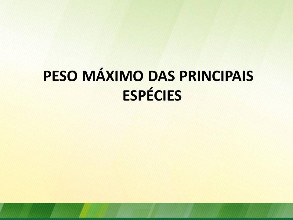 PESO MÁXIMO DAS PRINCIPAIS ESPÉCIES