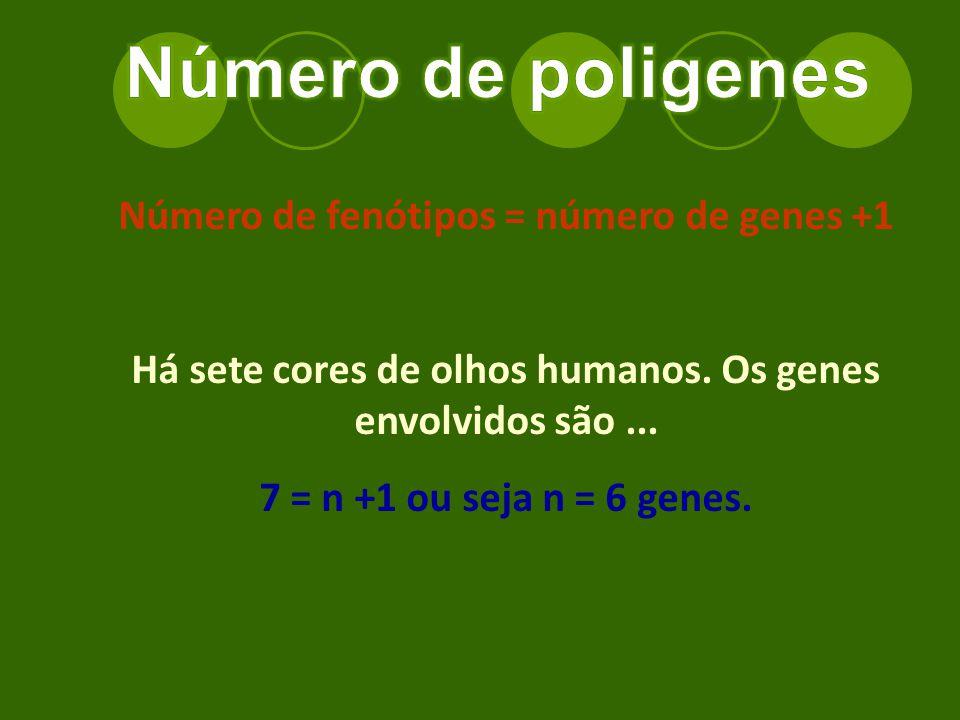 Número de poligenes Número de fenótipos = número de genes +1