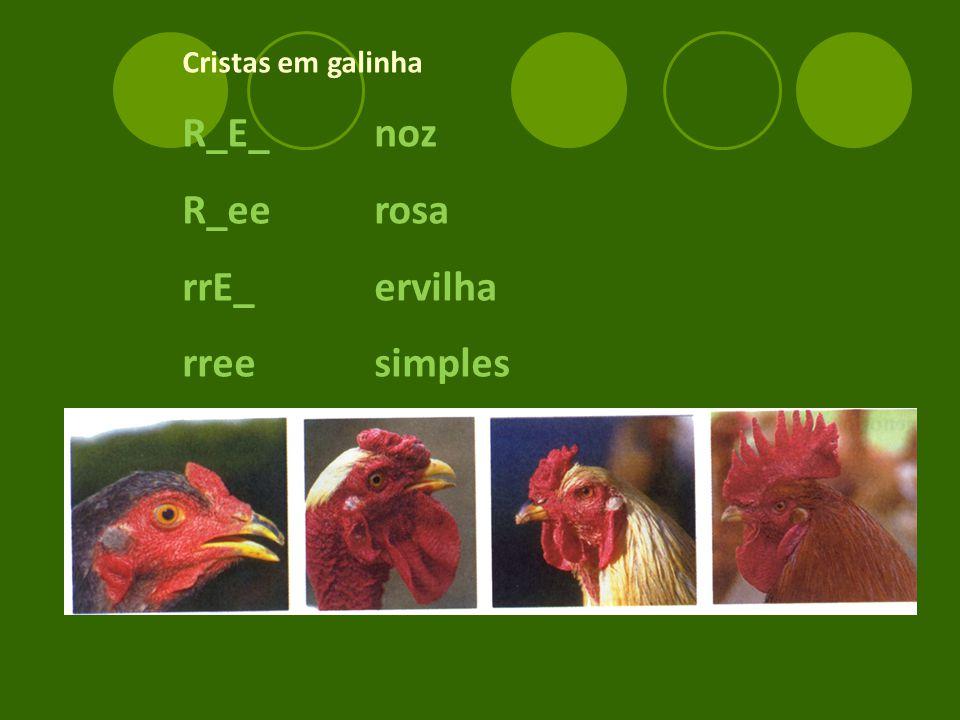Cristas em galinha R_E_ noz R_ee rosa rrE_ ervilha rree simples