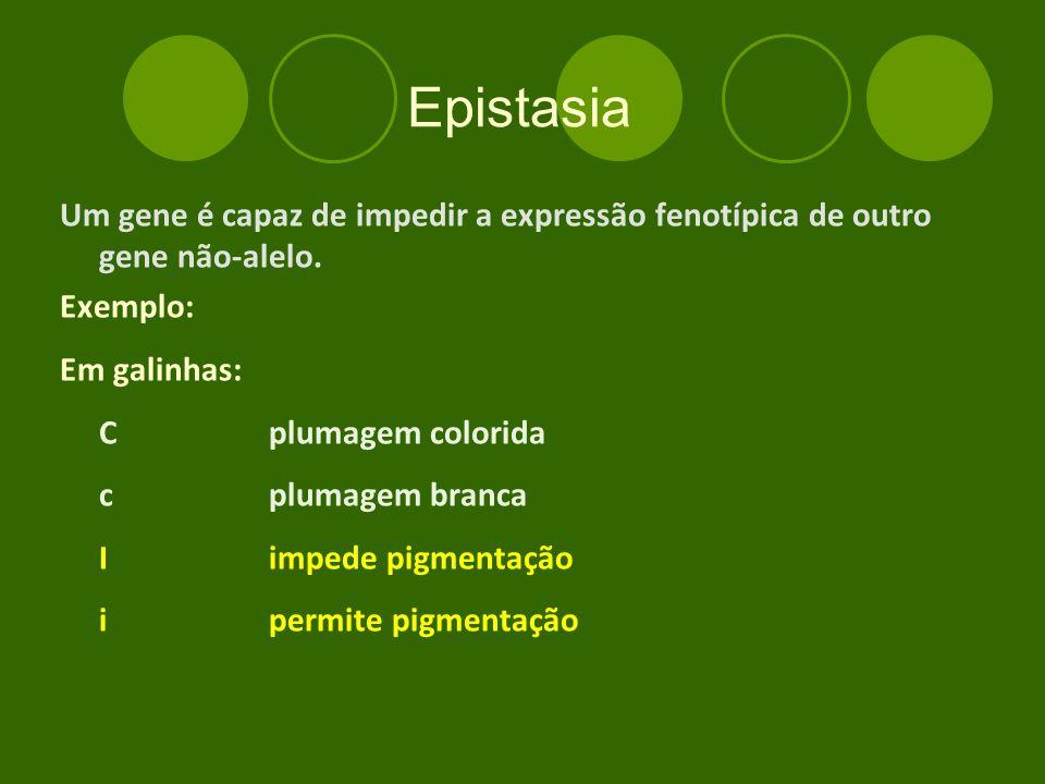 Epistasia Um gene é capaz de impedir a expressão fenotípica de outro gene não-alelo. Exemplo: Em galinhas:
