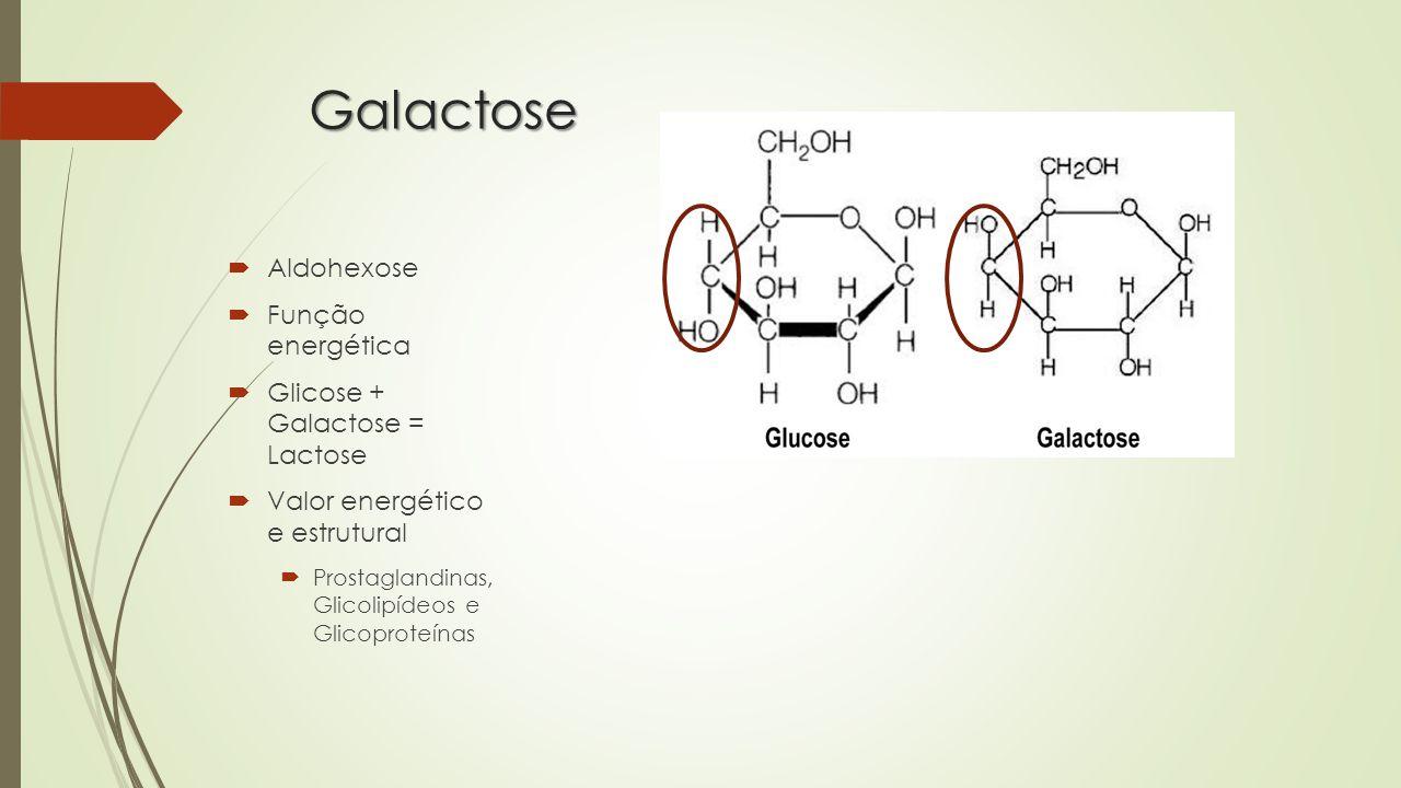 Galactose Aldohexose Função energética Glicose + Galactose = Lactose