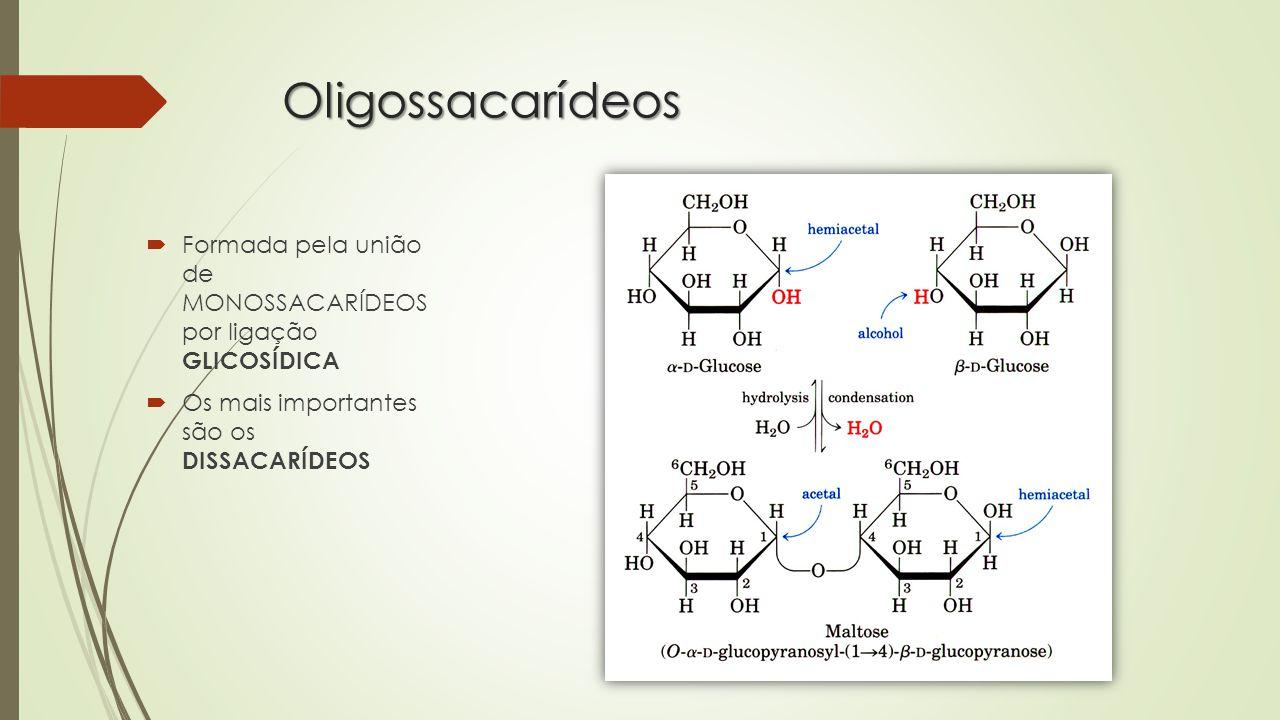 Oligossacarídeos Formada pela união de MONOSSACARÍDEOS por ligação GLICOSÍDICA.