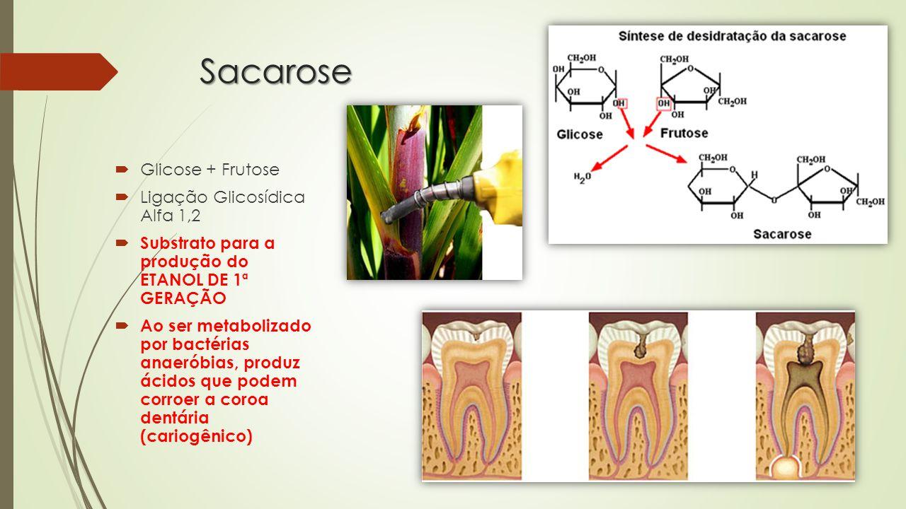 Sacarose Glicose + Frutose Ligação Glicosídica Alfa 1,2