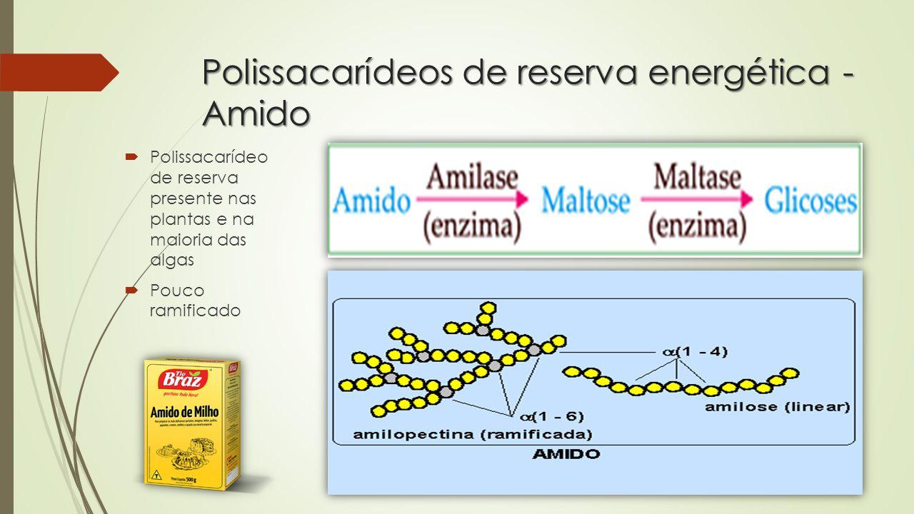 Polissacarídeos de reserva energética - Amido