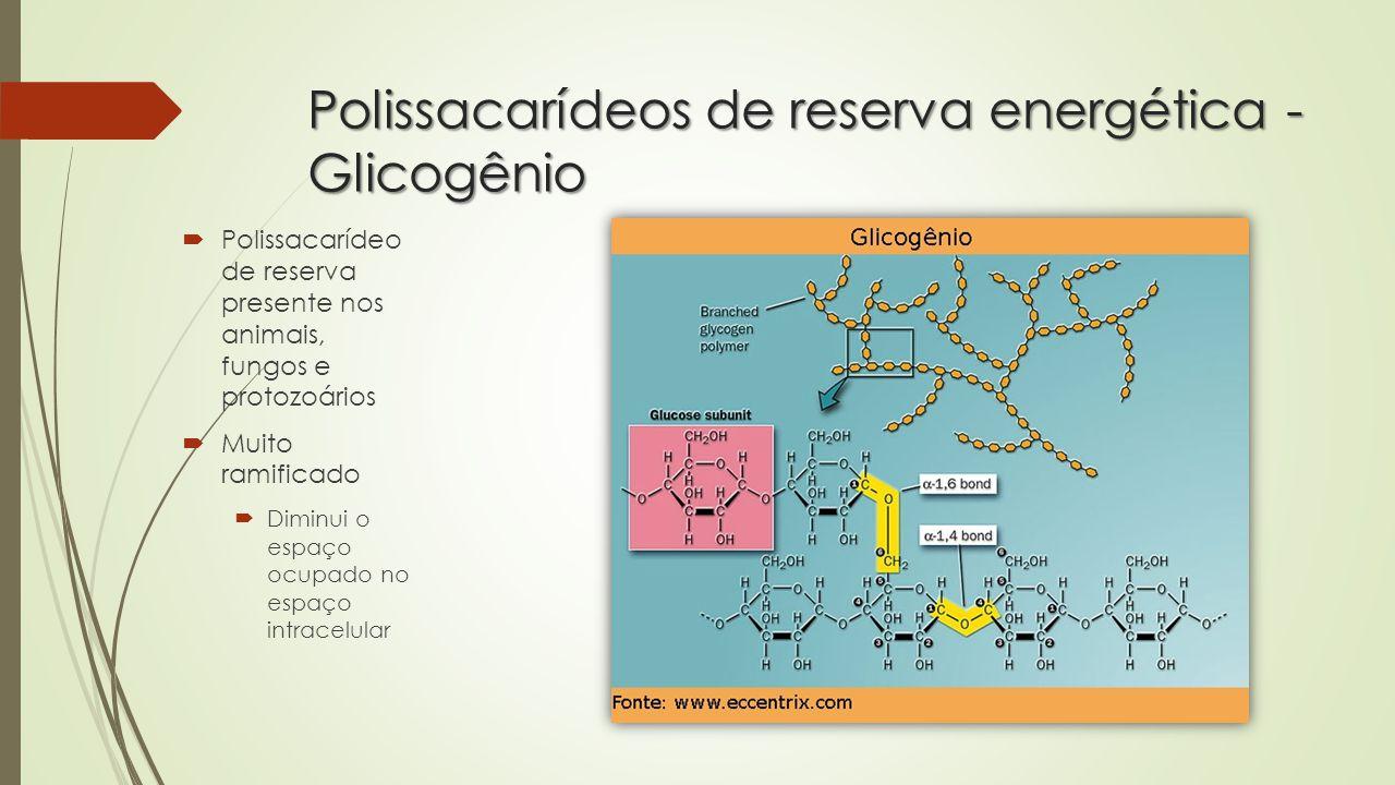 Polissacarídeos de reserva energética - Glicogênio