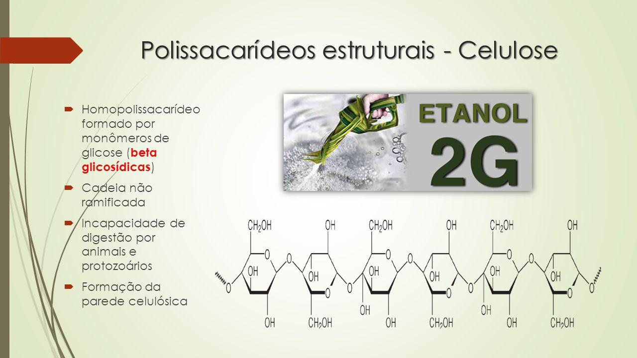 Polissacarídeos estruturais - Celulose