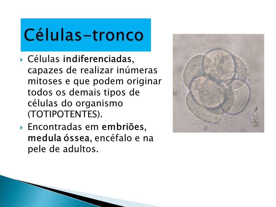 Células-tronco