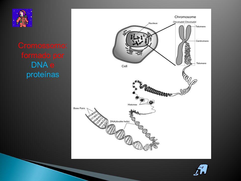 Cromossomo: formado por DNA e proteínas