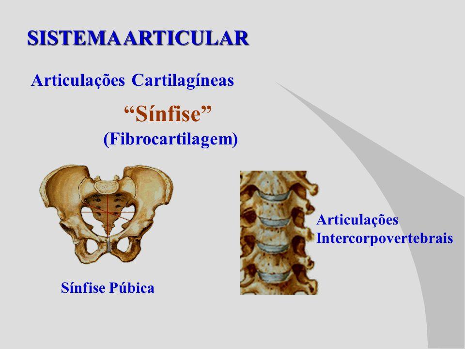 Sínfise SISTEMA ARTICULAR Articulações Cartilagíneas