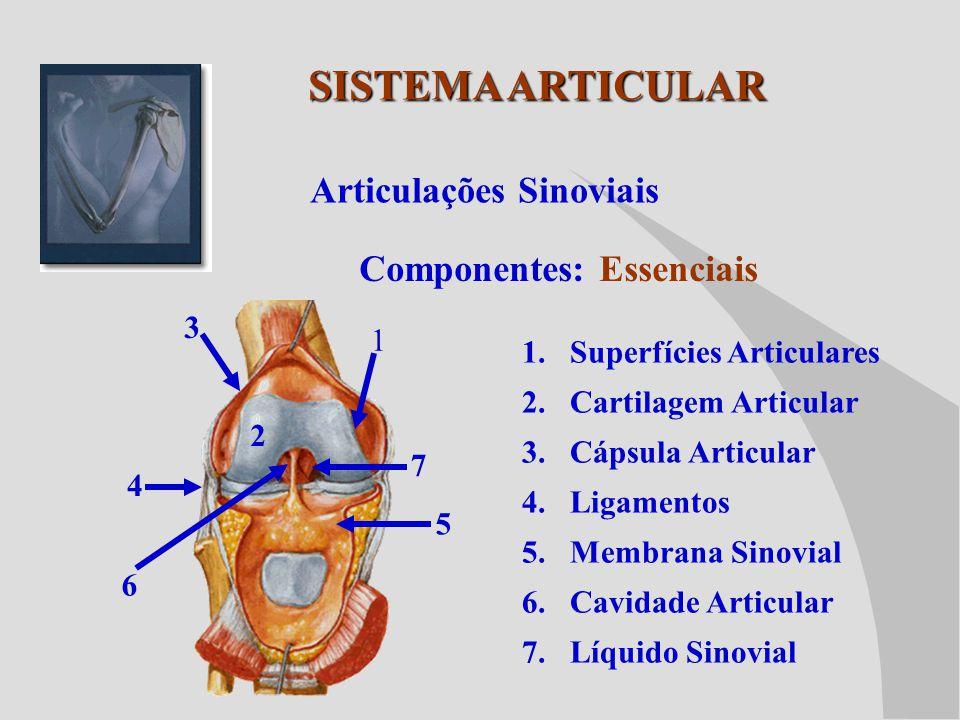 SISTEMA ARTICULAR Articulações Sinoviais Componentes: Essenciais 3 1