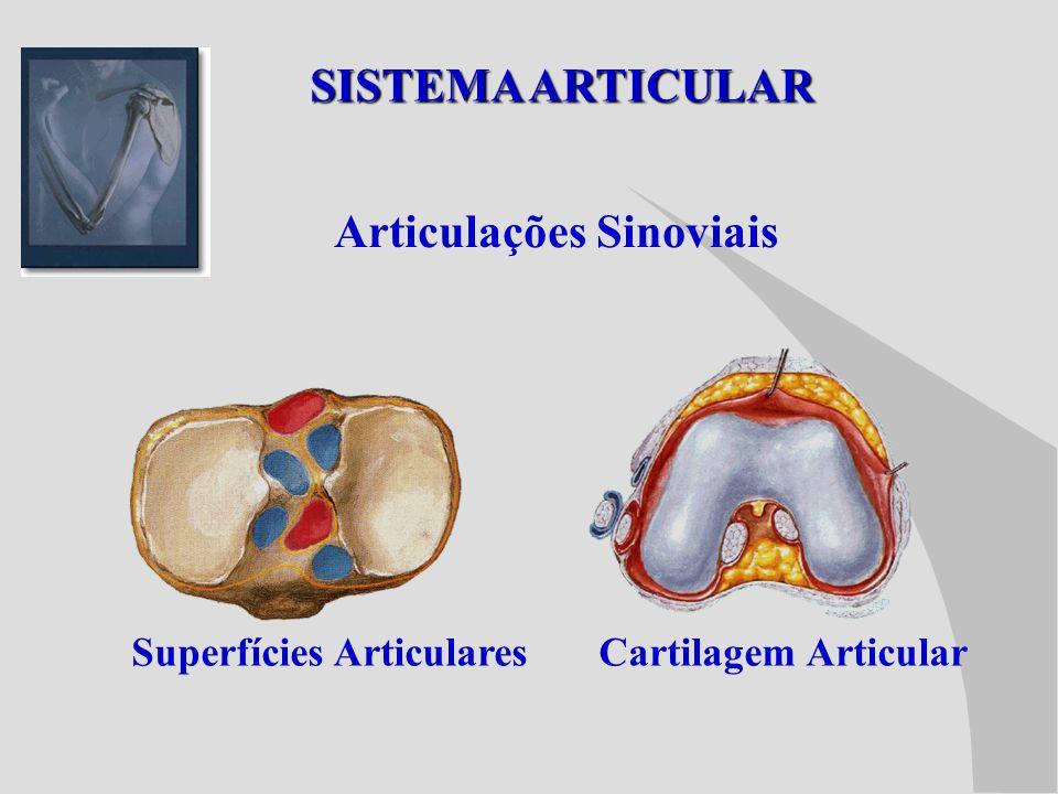 Articulações Sinoviais