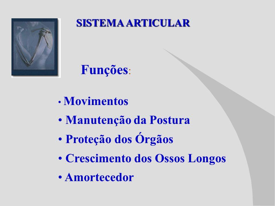 Funções: Manutenção da Postura Proteção dos Órgãos