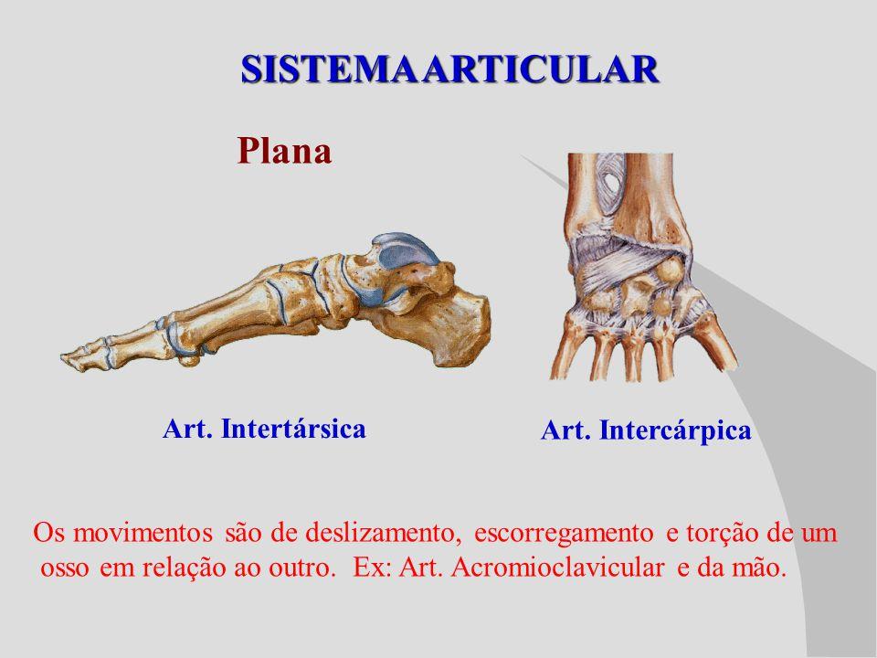 SISTEMA ARTICULAR Plana Art. Intertársica Art. Intercárpica