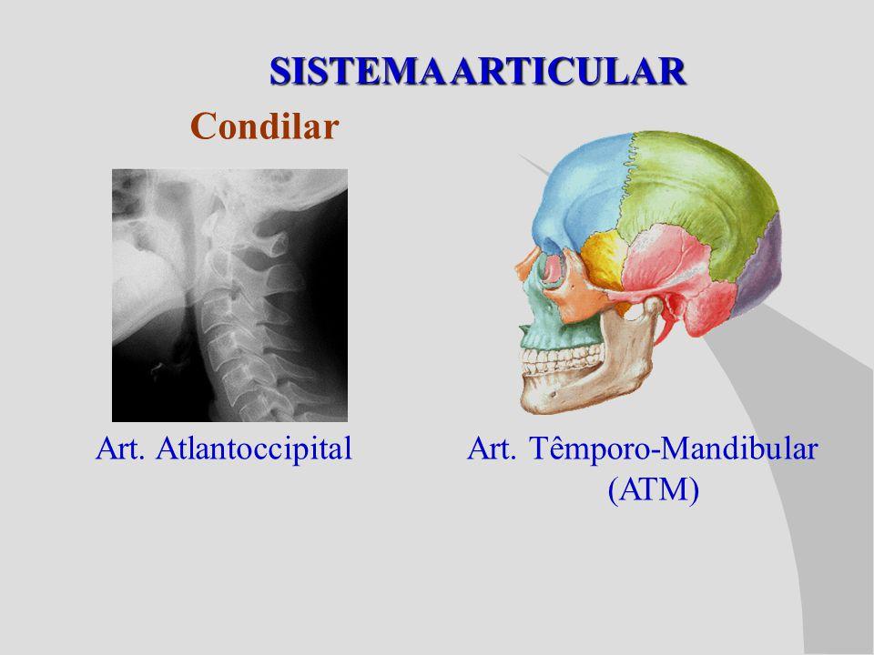 SISTEMA ARTICULAR Condilar Art. Atlantoccipital