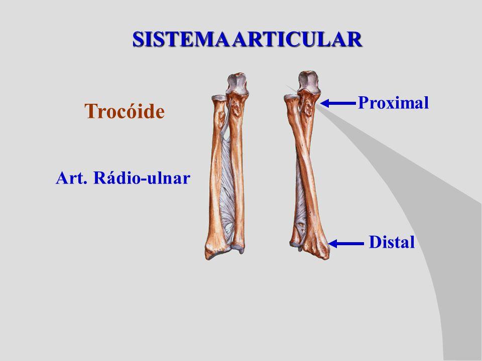 SISTEMA ARTICULAR Trocóide Art. Rádio-ulnar Proximal Distal