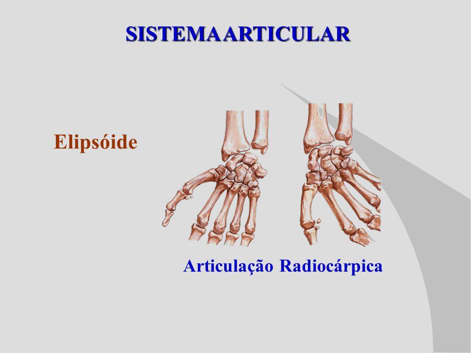 SISTEMA ARTICULAR Elipsóide Articulação Radiocárpica