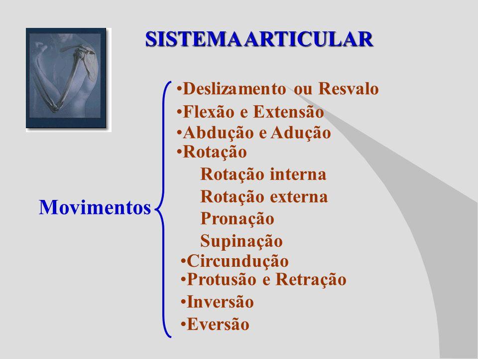 SISTEMA ARTICULAR Movimentos Deslizamento ou Resvalo Flexão e Extensão